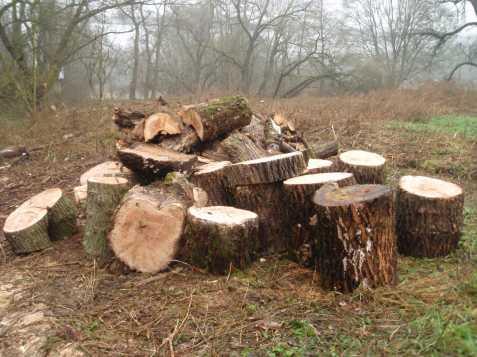 Dřevo levně